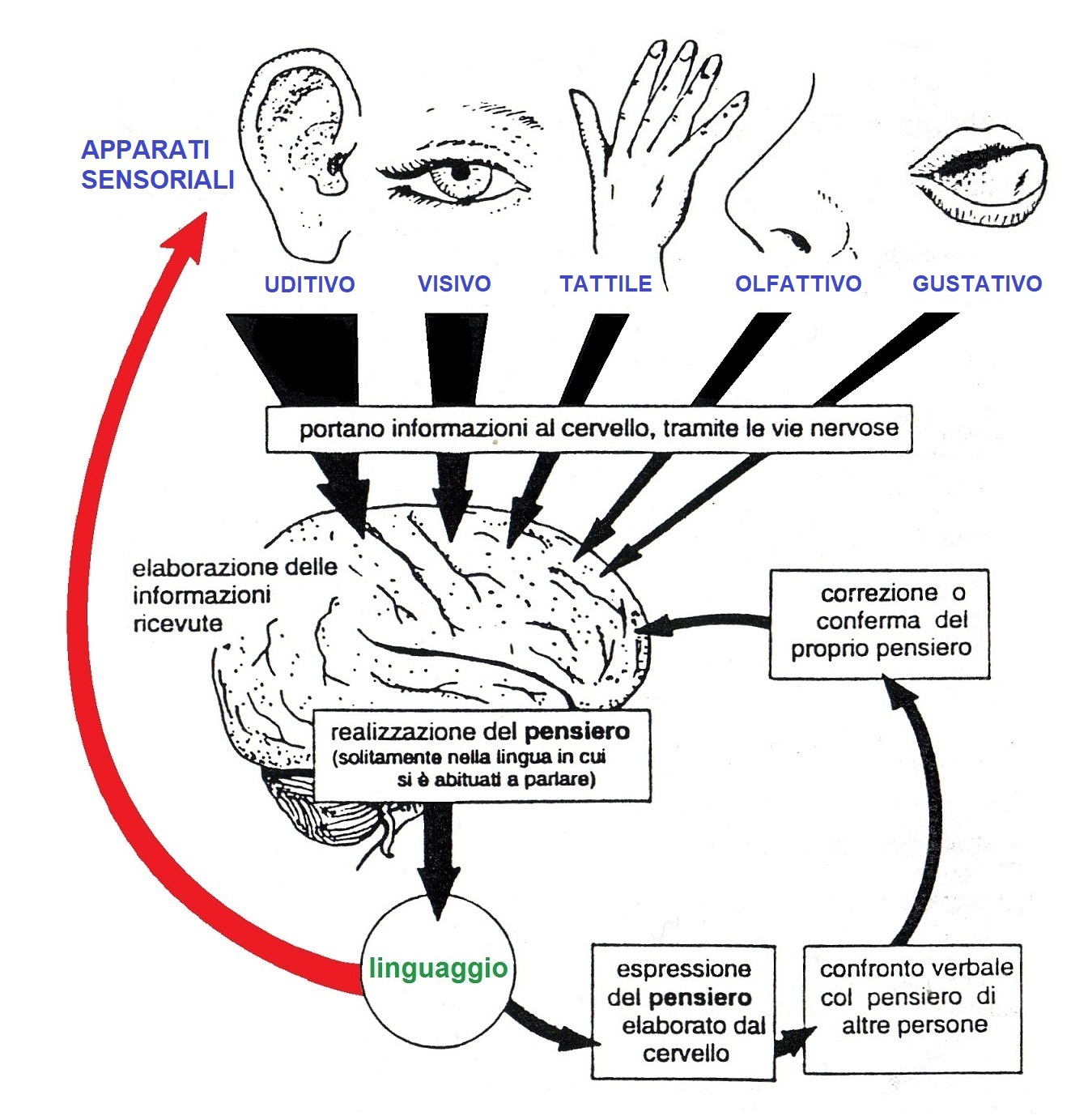 mental development in normal hearing